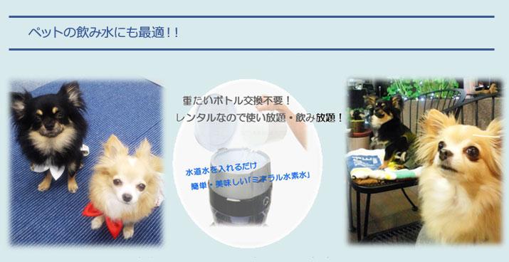 ペットの飲み水にも最適!!